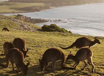 Весь этот великолепный остров разделен на множество национальных парков и заповедных зон